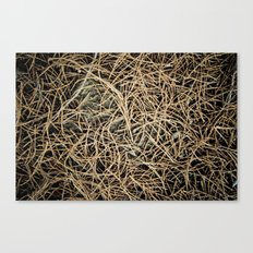 Ground Cover Canvas Print
