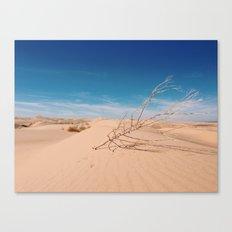 tumbling on dunes Canvas Print