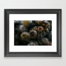 Prickly points Framed Art Print