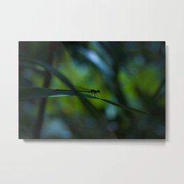 Macro photograph of a silhouette of a damselfly. Metal Print