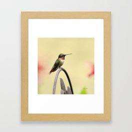 Tiny Hummingbird Framed Art Print