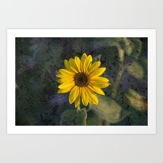 Sunflower texture Art Print