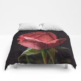Single red rose 0905 Comforters