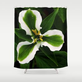 Green-striped White Trillium  (Disease can be beautiful) Shower Curtain