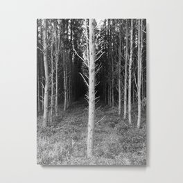 Tree Perspective Metal Print