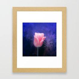 Pink Tulip in indigo Framed Art Print