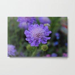 Butterfly Blue Pincushion Metal Print
