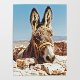Donkey photo Poster