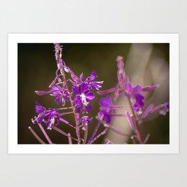Concept flora : Lythracaee Art Print