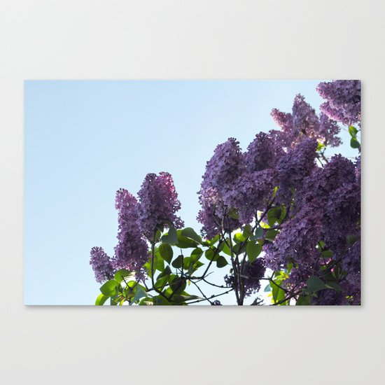 Good Morning Canvas Print