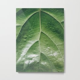 Fiddle Leaf Fig Leaf Metal Print