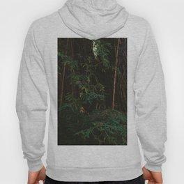 Redwood Forest III Hoody