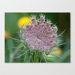 Wild Carrot Blossom Canvas Print