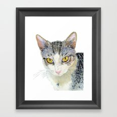 Snoshu the Tabby Cat Framed Art Print