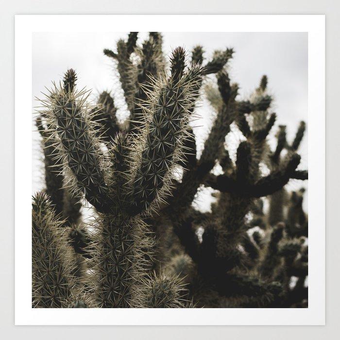 Cactus_0007 Art Print