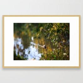Duck pond Framed Art Print