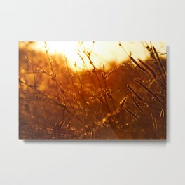 Illinois Sunset Metal Print
