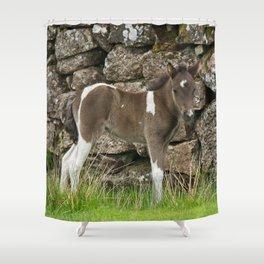 Dartmoor Foal Shower Curtain