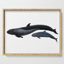False killer whale Serving Tray