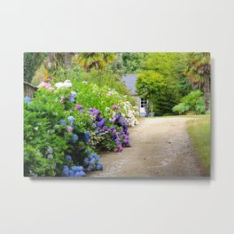 Hydrangea lined path in Bretagne, France Metal Print