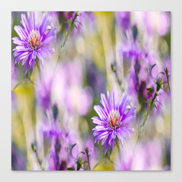Summer dream - purple flowers - happy and colorful mood Canvas Print