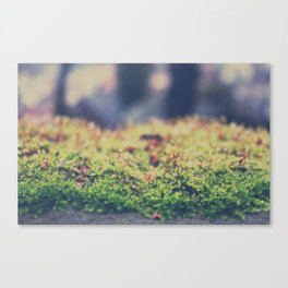 Fairy Moss Canvas Print