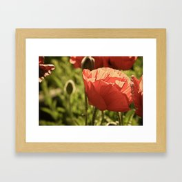 poppies. Framed Art Print