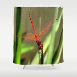 Beautiful Firecracker Dragonfly Shower Curtain