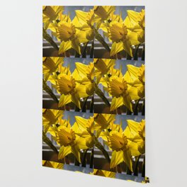 Daffodils from my floral photography collection Wallpaper