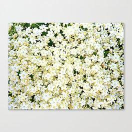 Elderflower Blossom - Tiny Flowers - Creamy White With Yellow Canvas Print