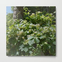 abundant honeysuckle  Metal Print