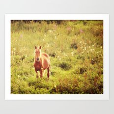 All the Pretty Horses Art Print