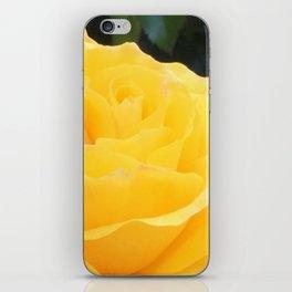 My Yellow Rose iPhone Skin