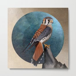 American kestrel bird illustration Metal Print
