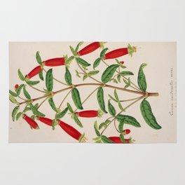 Correa Cordinalis Vintage Botanical Floral Flower Plant Scientific Illustration Rug