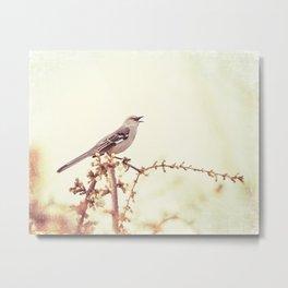 Mockingbird Bird Photography, Mocking Bird on Tree Branch, Nature Photograph Metal Print