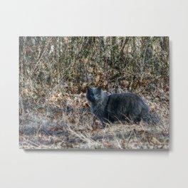Cat in the Woods Metal Print