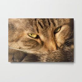 Sly cat Metal Print