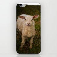 lamb iPhone & iPod Skins featuring Lamb by Guna Andersone & Mario Raats - G&M Studi