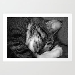 Tiger in my bed Art Print