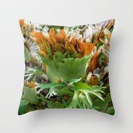 Mature Form of Staghorn Ferns Throw Pillow