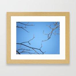 3 Branches Framed Art Print