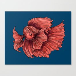 Coral Siamese fighting fish Canvas Print