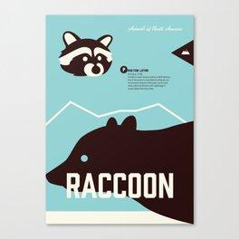 Wildlife of North America: Raccoon Canvas Print