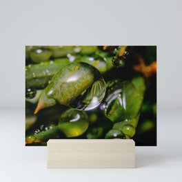 Freezing Rain V. Macro Photography Mini Art Print