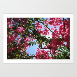 Perfect Pink Bougainvillea In Blossom Art Print
