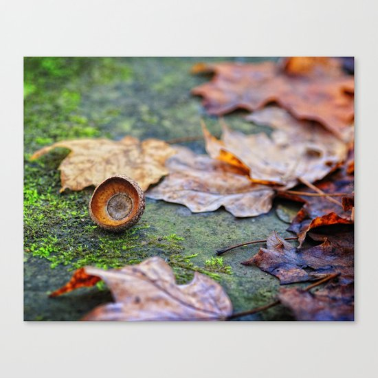Shaking down the acorns Canvas Print