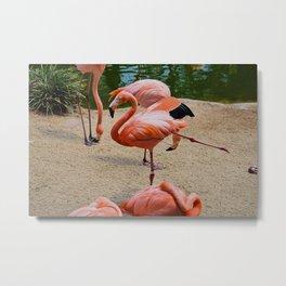 Fancy Flamingos Metal Print