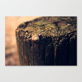 Once there was a little snail Canvas Print