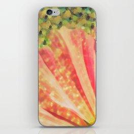 Pink Cosmos Flower iPhone Skin
